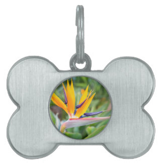 Close up Crane flower or Strelitzia reginaei Pet Name Tag