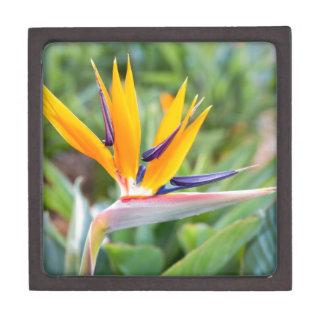 Close up Crane flower or Strelitzia reginaei Premium Jewelry Boxes