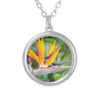 Close up Crane flower or Strelitzia reginaei Silver Plated Necklace