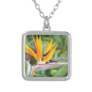 Close up Crane flower or Strelitzia reginaei Silver Plated Necklace