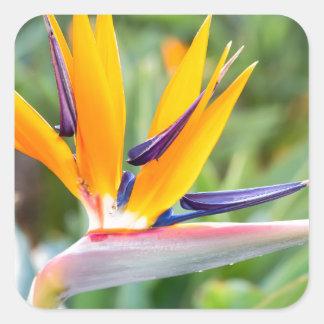 Close up Crane flower or Strelitzia reginaei Square Sticker
