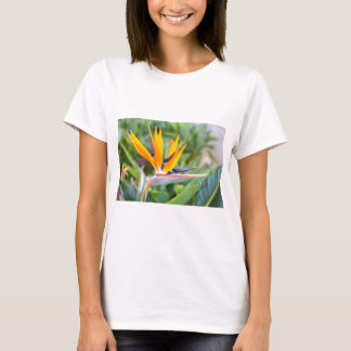 Close up Crane flower or Strelitzia reginaei T-Shirt
