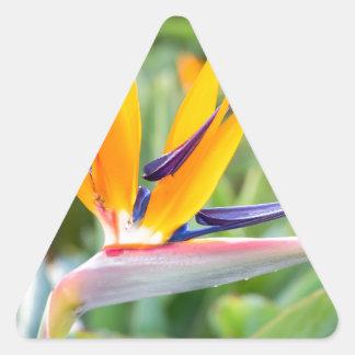 Close up Crane flower or Strelitzia reginaei Triangle Sticker