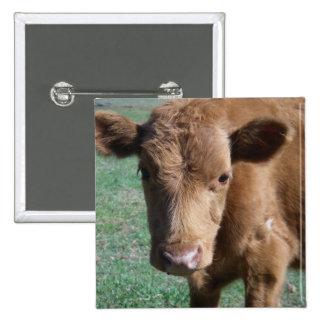 Close-up Cute Calf Button