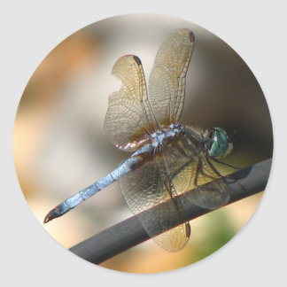 Close up Dragonfly Classic Round Sticker