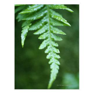 close up fern in rainforest postcard
