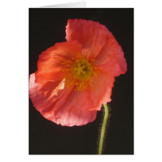 Close Up Flower Blank Greeting Card
