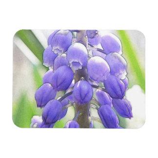Close Up - Grape Hyacinth Rectangular Photo Magnet