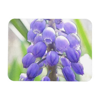 Close Up - Grape Hyacinth Rectangular Photo Magnet