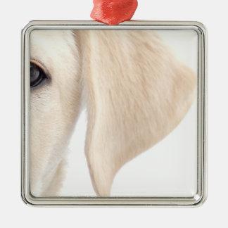 Close-up Half Face of Yellow Labrador Silver-Colored Square Decoration