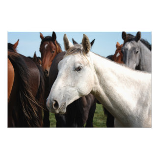 Close-up herd of horses photo print