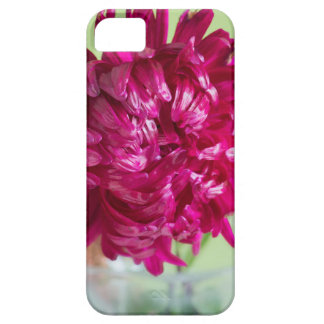 Close-up image of the flower Aster Case For The iPhone 5