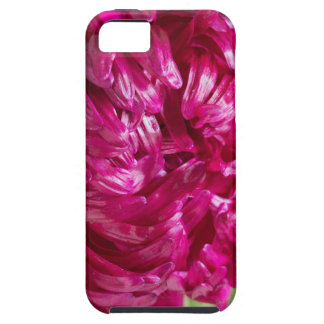 Close-up image of the flower Aster iPhone 5 Covers