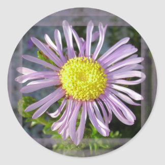 Close Up Lilac Aster With Bright Yellow Centre Classic Round Sticker
