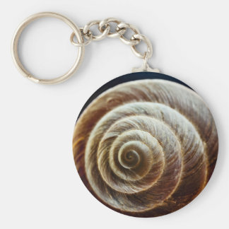 Close-Up Look Of Snail Shell Key Ring