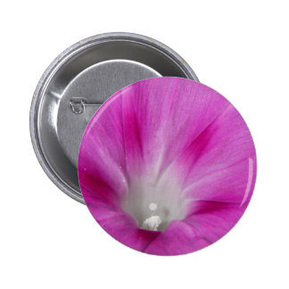Close-up Morning Glory Button