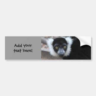 Close up of a Black and White Ruffed Lemur Bumper Sticker