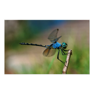 Close-Up Of A Blue Dragon Fly On A Branch Poster
