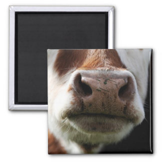 close up of a cow square magnet