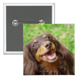 Close-up of a Dachshund dog 15 Cm Square Badge
