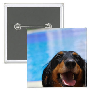 Close-up of a Dachshund dog panting 15 Cm Square Badge
