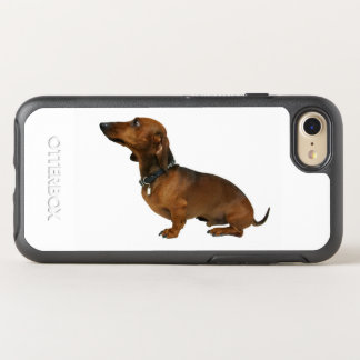 Close up of a dachshund OtterBox symmetry iPhone 8/7 case