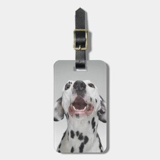 Close up of a Dalmatian dog Luggage Tag