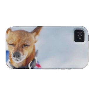 Close-up of a dog iPhone 4 cases