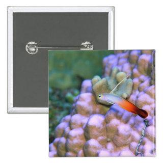 Close up of a fire dart fish, Okinawa, Japan 15 Cm Square Badge