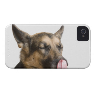 Close-up of a German Shepherd licking its nose iPhone 4 Covers