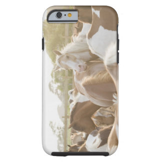 Close up of a herd of horses tough iPhone 6 case