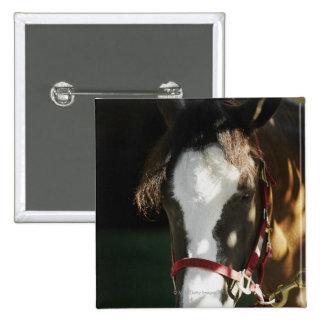 Close-up of a horse 15 cm square badge