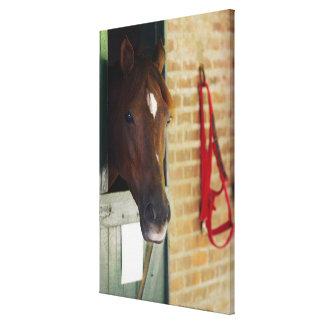Close-up of a horse 2 canvas prints