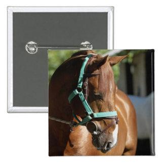 Close-up of a horse 4 15 cm square badge