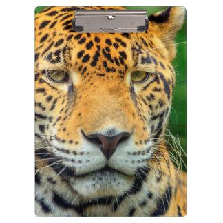 Close-up of a jaguar face, Belize Clipboard