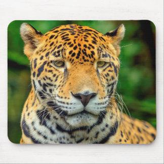Close-up of a jaguar face, Belize Mouse Pad