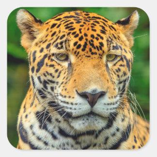 Close-up of a jaguar face, Belize Square Sticker