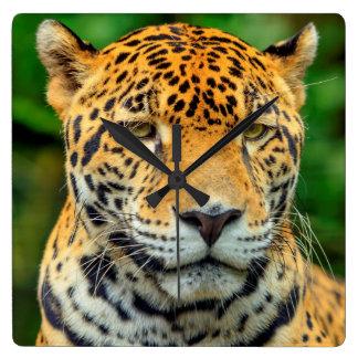 Close-up of a jaguar face, Belize Square Wall Clock