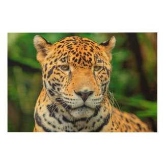 Close-up of a jaguar face, Belize Wood Wall Art