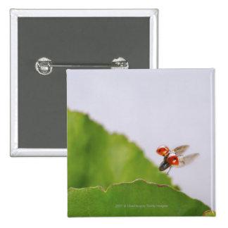 Close-up of a ladybug flying over a leaf 15 cm square badge