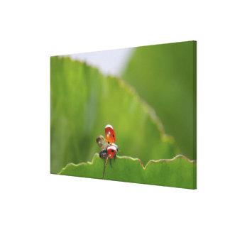 Close-up of a ladybug on a leaf stretched canvas print