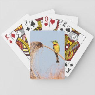 Close-up of a little bee-eater bird card deck