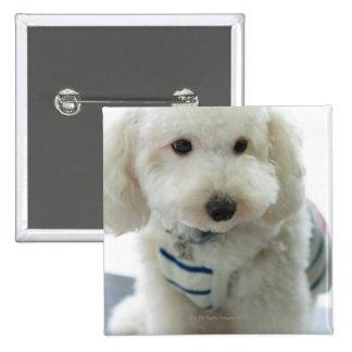 Close-up of a miniature poodle 15 cm square badge