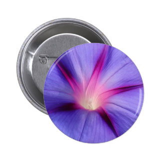 Close Up of A Morning Glory Purple and Pink Flower Button