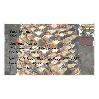 Close up of a palm tree pack of standard business cards
