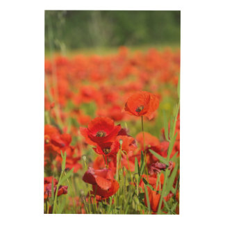 Close-up of a Poppy field, France Wood Print