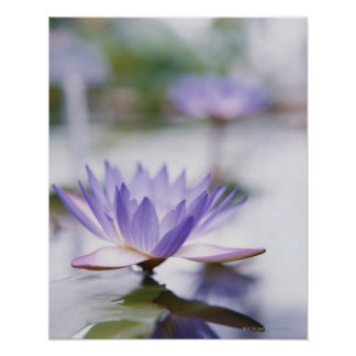 Close-Up of a Purple Water-Lily Floating on Poster