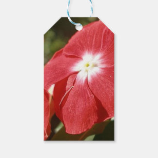Close Up Of A Red Busy Lizzie Flower Gift Tags