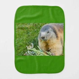 close-up of a sociable marmot on burp cloth