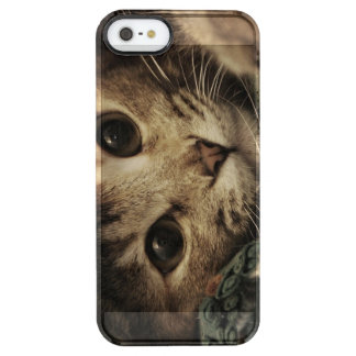 Close up of a tabby cats eyes clear iPhone SE/5/5s case